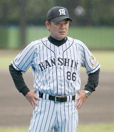 練習を見る阪神・和田監督=1日、神宮
