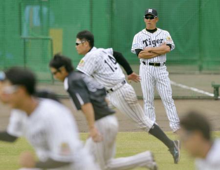 秋季キャンプで練習を見守る阪神の金本監督(右奥)=安芸