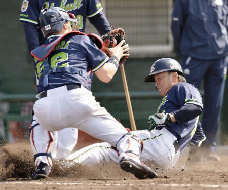 本塁クロスプレーの練習で、滑り込むヤクルト・雄平。捕手中村=浦添