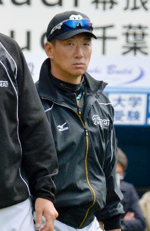 オープン戦の試合開始前、練習を見守る阪神・金本監督=16日、千葉市のQVCマリンフィールド