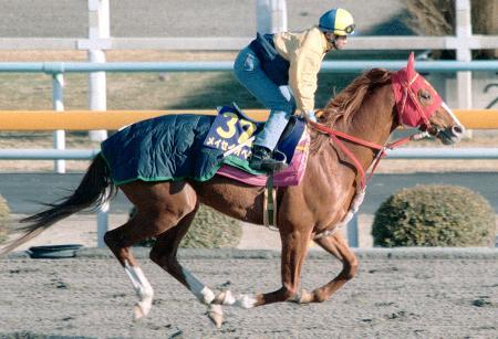 地方競馬所属で唯一中央競馬のG1レースを制覇した競走馬メイセイオペラ=茨城県の美浦トレーニングセンター