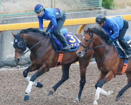 日本ダービーの最終追い切りで、仕上がりの良さをアピールするアルアイン(左)=栗東トレーニングセンター