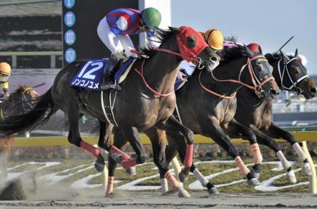 第35回フェブラリーステークスを制したノンコノユメ(12)。中央は2着のゴールドドリーム、右は3着のインカンテーション=東京競馬場