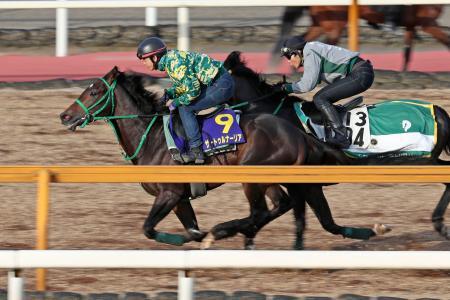 日本ダービーに向けた最終追い切りで併せ馬に先着するサートゥルナーリア(左)=22日、栗東トレーニングセンター
