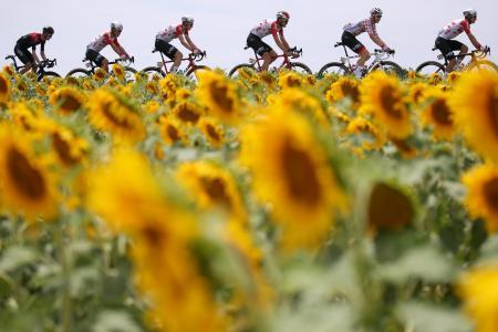 自転車ツール・ド・フランス第11ステージ、ヒマワリ畑の中を駆け抜けるレース集団=17日、トゥールーズ(ゲッティ=共同)