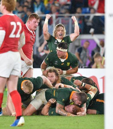 ウェールズ―南アフリカ 後半、ウェールズがスクラムで反則を犯し、ガッツポーズする南アフリカのデクラーク=日産スタジアム