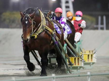 北海道帯広市で開かれた「ばんえい競馬」で、地方・中央競馬を通じ最多となる30連勝を達成したホクショウマサル=6日夜