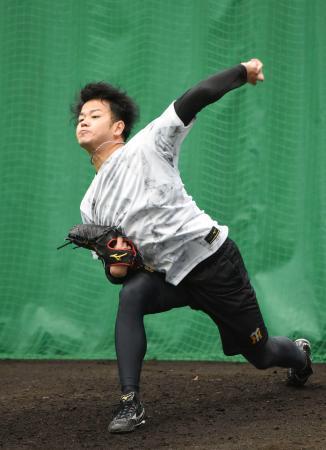 合同自主トレで投球練習する阪神・高橋=沖縄県宜野座村
