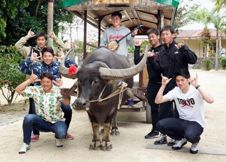 キャンプ最初の休日に水牛車を体験したロッテの佐々木朗(右端)ら新人選手=沖縄・竹富島