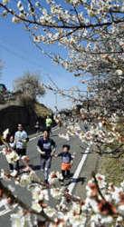 梅の榛名路、3291人駆け抜ける 高崎でマラソン