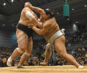 高安6連勝、照ノ富士を会心撃破 大相撲春場所