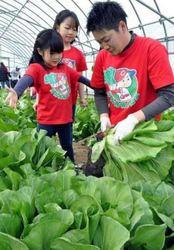 カープ 広島菜×カープ坊やのTシャツ製作