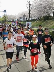 満開の桜の下、2千人が健脚競う 新潟ロードレース大会
