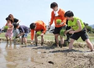 バスケBリーグ 新潟、日本酒造りでファンと交流 田植えに挑戦
